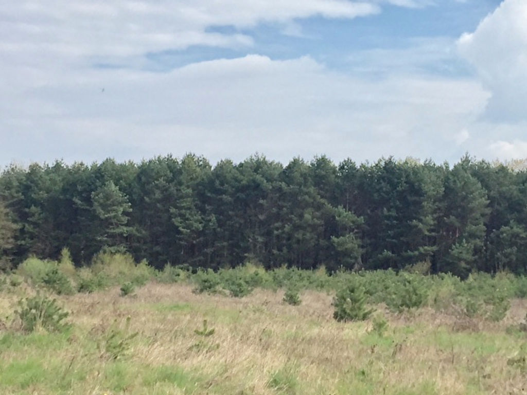 terres forestières